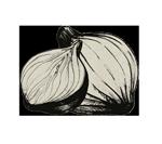 oignon-ferme-des-volcans-recettes